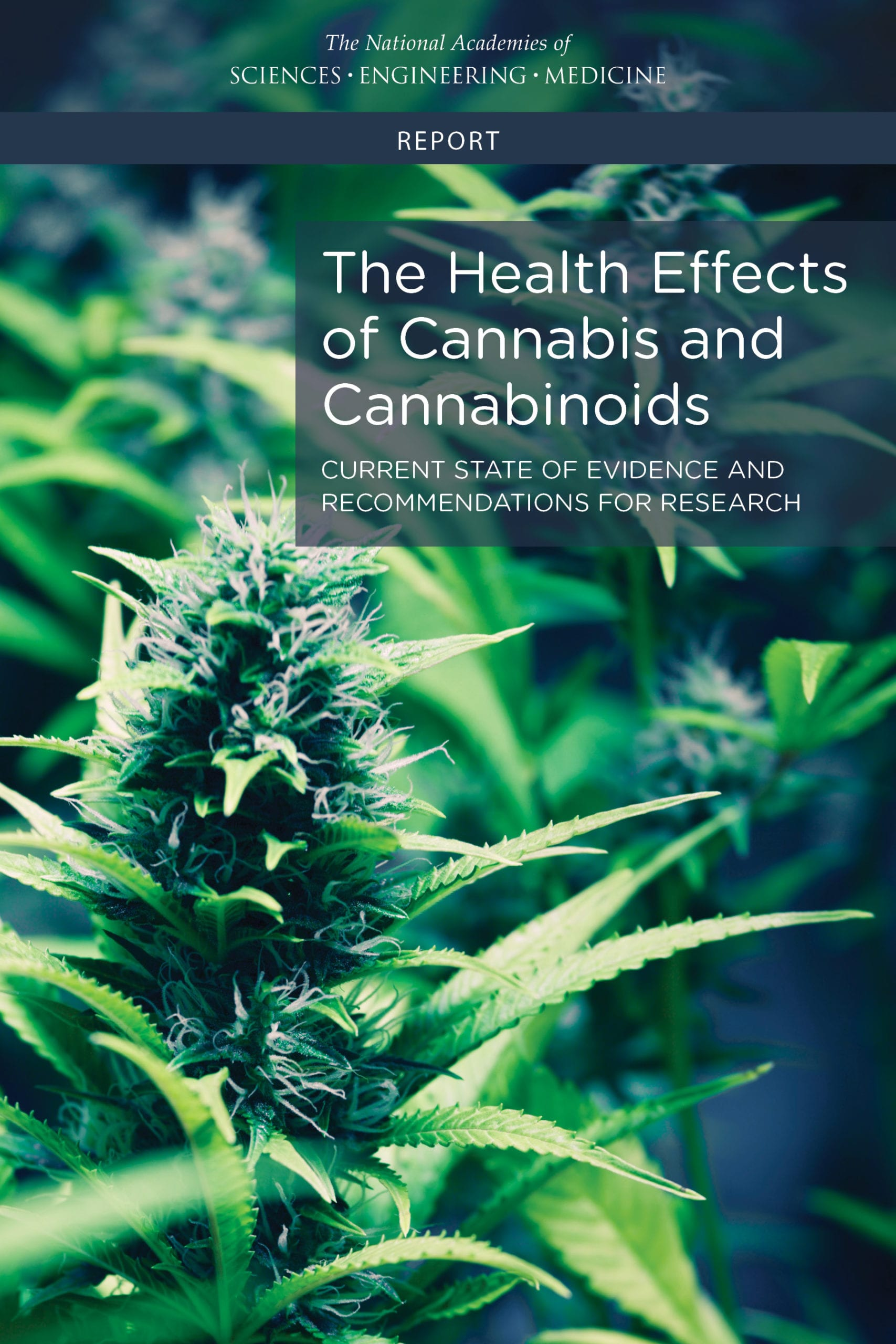 an essay on the effects of marijuana use on an organism Marijuana, one of the uttermost common drug used in america ought to be legalized through government regulation and growth conditions, the long term and short term effects of the drug, and the effects it could have on today's youth, it can easily be seen what choice should be made in terms of.